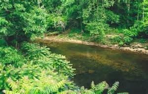 Daddys Creek
