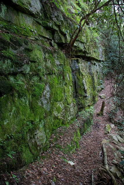 Moss covered wall between ladder and Rock Creek Bridge (Ron Shrieves)