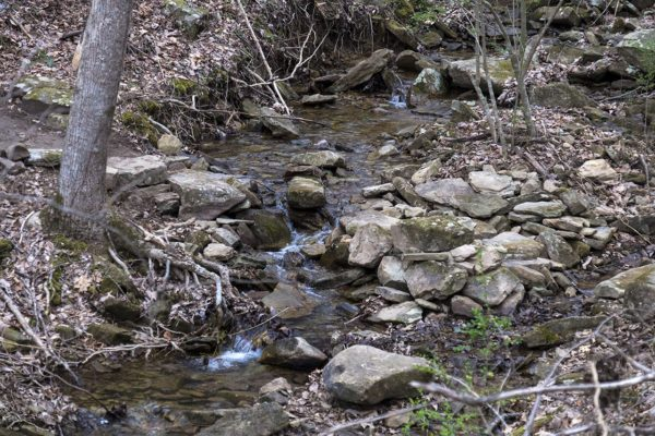 The trail crosses the head waters of Sale Creek. (Stephens)