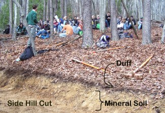 Mineral soil - side hill cut