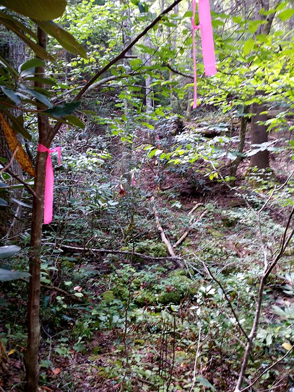 Flags mark intended trail alignment